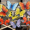 John P. Cleary | The Herald Bulletin<br /> Some of the 40 brightly painted butterflies that are on display in front of Bethel United Methodist Church at 38th and Layton Road.