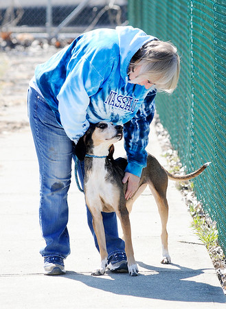 Don Knight | The Herald Bulletin<br /> Denise Gordon from Elwood walks Jenny, a coonhound mix, during Super Saturday open house at the Animal Protection League on Saturday.