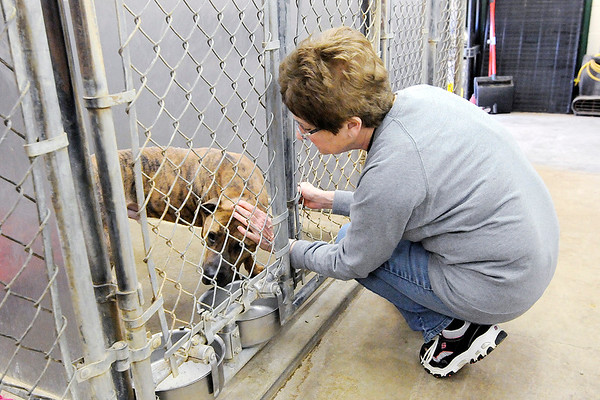 Don Knight   The Herald Bulletin<br /> Volunteer Linda Manderson pets Boston during the Animal Protection League's Super Saturday open house on Saturday.