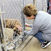Don Knight | The Herald Bulletin<br /> Volunteer Linda Manderson pets Boston during the Animal Protection League's Super Saturday open house on Saturday.