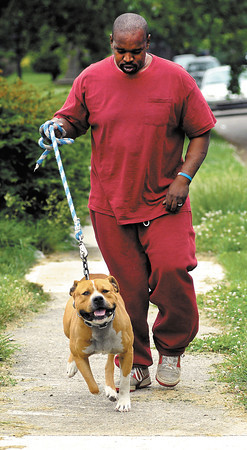 Taronse Grant trains his American Staffordshire Terrier, M.J. for dog bodybuilding competition with multiple four mile walks daily.