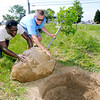 John P. Cleary | The Herald Bulletin<br /> City Parks Department workers Steven Perry and Ranny Hinton roll this Red Oak tree into it's hole as they were planting more then two dozen Red Oak trees along the east side of Jackson Street Wednesday at the former Prime Battery property.