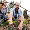 John P. Cleary | The Herald Bulletin<br /> Tom and Crystal Ostler with their 8 acres in the country where they are trying to raise a edible landscape.  Here they check on one of the thornless blackberry bushes they have planted.