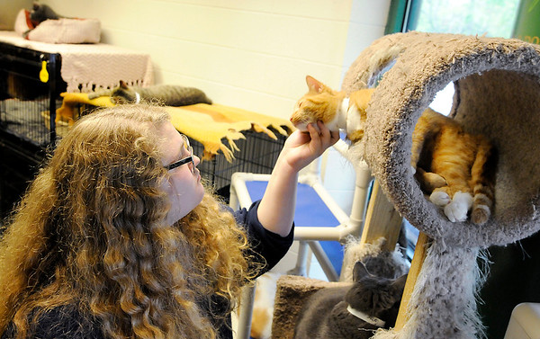 Don Knight | The Herald Bulletin<br /> Lizzy Neal pets a cat while volunteering at the Anderson Protection League last Tuesday. Led by 8th grade teacher Jeneva Moore students from Holy Cross School volunteer at APL as a service project. <br /> Students have volunteered over 200 hours.