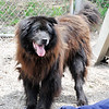 John P. Cleary | The Herald Bulletin<br /> This is Buck, who will turn 14 shortly, the surviving sibling of Fargo who just past away at the Madison County Humane Society. Both dogs have lived their entire lives at the shelter.