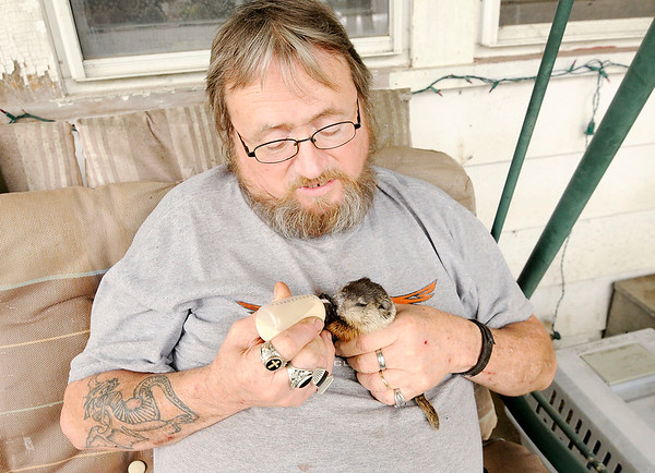 Don Knight   The Herald Bulletin<br /> Nick Ellis is caring for a baby groundhog until he can be released into the wild.