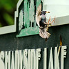 Don Knight | The Herald Bulletin<br /> A European Starling returns to its nest inside the Shadyside Lake Activity Center sign with a meal for its young on Tuesday.