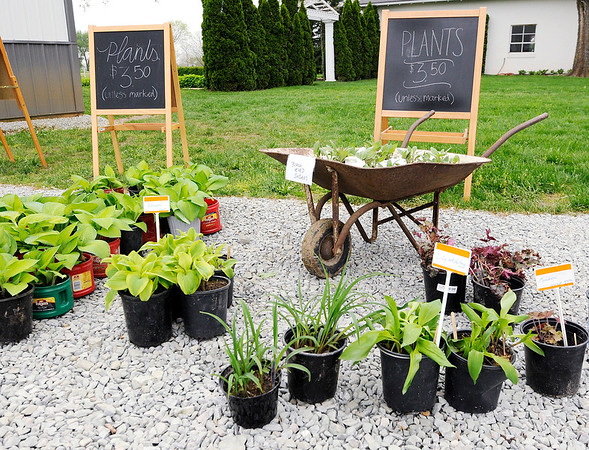 Don Knight   The Herald Bulletin<br /> Plants for sale during The Highway 38 Sale on Friday.