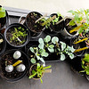 Don Knight | The Herald Bulletin<br /> The gardening club 'Doah Growers takes advantage of the windows in an entryway to grow plants.