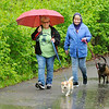 Don Knight | The Herald Bulletin<br /> From left, sisters Dixie and Susie Carpenter walk their dogs Jack and Helena in  the Madison County Humane Society Dog Walk-A-Thon at Shadyside Park on Saturday.