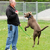 Don Knight | The Herald Bulletin<br /> Loki jumps up a Phil Braschear holds a foam football at the new Falls Bark Dog Park in Pendleton.