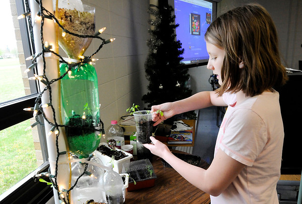 Don Knight | The Herald Bulletin<br /> Lilly Shotts, 12, picks up a container of carrot seedlings as the gardening club at Shenandoah Middle School, 'Doah Growers, tend to their plants on Thursday.
