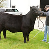 Kendall Leonhard has been working daily with his heifers in hopes of exhibiting in-person during the 4-H Fair.