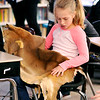 John P. Cleary |  The Herald Bulletin<br /> Averi Presley, at student in Megan Nolan's third and fourth-grade high ability class at Alexandria-Monroe Intermediate School, looks over this deer skin during a presentation on the Native American Miami tribe this past Thursday.