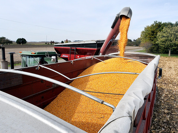 John P. Cleary   The Herald Bulletin<br /> Ousley Farms harvests the last field of corn they planted Tuesday on 300 North, north of State Road 28.