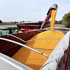 John P. Cleary | The Herald Bulletin<br /> Ousley Farms harvests the last field of corn they planted Tuesday on 300 North, north of State Road 28.