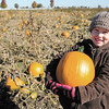 Macey Parker holds the pumpkin she chose from the pumpkin patch as Pendleton Elementary students visit Smith Family Farms during a field trip on Thursday.