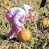 Serena Richardson searches for a pumpkin in the pumpkin patch as Pendleton Elementary students visit Smith Family Farms during a field trip on Thursday.