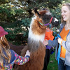 Anderson University freshman Erica Martin brought her llama Storm to the  L'amifidel booth during AU's homecoming on Saturday.
