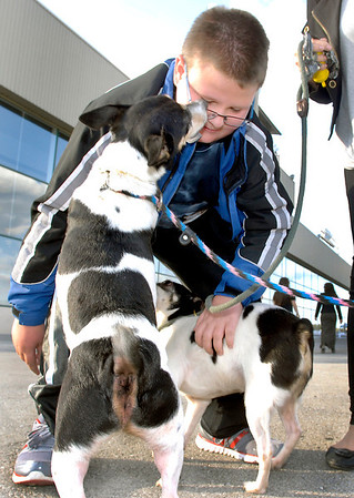 """Ben Casity, 10, from Danville, Ind., is greeted by Rhett and Scarlet from the Animal Protection League at Hoosier Park Friday evening during """"A Night at the Park with the Animal Protection League."""""""