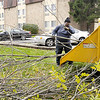 Don Knight/The Herald Bulletin<br /> Parks Department employee James Willis feeds limbs into a wood chipper on Tuesday as Ash trees along the Thomas R. McMahan River Walk are removed because of the Emerald Ash Borer.