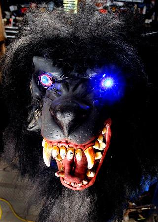 John P. Cleary | The Herald Bulletin<br /> David McCoy's  animatronic Halloween wolf.