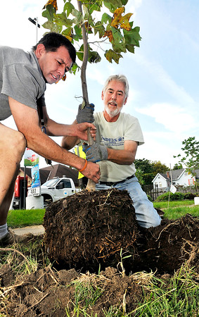 John P. Cleary   The Herald Bulletin<br /> Anderson Tree Commission voluteer Jason Chubb and bob Wehrley, Tree Commission acting president, put in a tulip tree along the 1000 block of West 8th Street Wednesday. This is part of the city planting 100 home grown trees this year harvested from the city nursery.