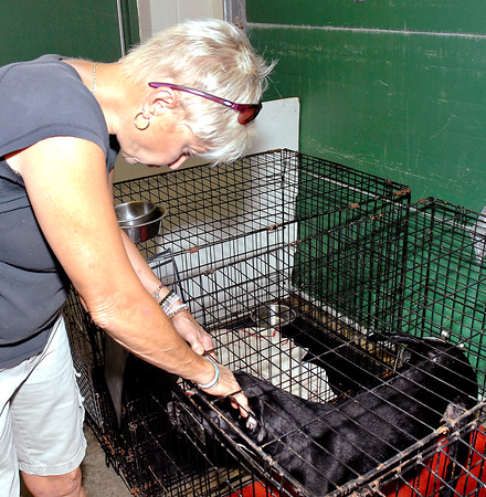 Stu Hirsch | The Herald Bulletin<br /> Maleah Stringer, executive director of the Animal Protection League, checks on one of the dogs housed at the facility.