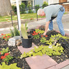 Don Knight | The Herald Bulletin<br /> Tim Montgomery tends to the garden at Stepping Stones in Anderson where he lives.