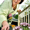 John P. Cleary |  The Herald Bulletin<br /> Nancy Zimmerman checks out the Monarch butterfly that has found her flowers after being released into her garden by her friend Loretta Heiniger.