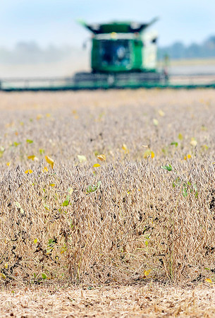 John P. Cleary    The Herald Bulletin<br /> Despite the torrential rains experienced in Indiana during the spring months, the impact on the fall harvest might be less than feared as farmers are now starting to harvest their fields.