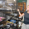 Stu Hirsch | The Herald Bulletin<br /> Maleah Stringer, executive director of the Animal Protection League, checks on cats housed at the facility.