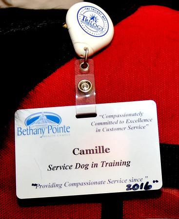 John P. Cleary | The Herald Bulletin<br /> Linda Sheppard, an LPN at Bethany Pointe, brings her service dog Camille to work with her to help her with her PTSD. Camille has become part of the team and has her own Bethany Pointe employee tag.