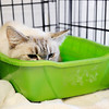 Don Knight   The Herald Bulletin<br /> A cat huddles in its cage at The Animal Protection League after being removed from a home in rural Madison County that was condemned after Sheriff deputies discovered the animals living in squalid conditions.