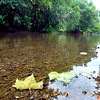 John P. Cleary | The Herald Bulletin file photo<br /> Fallen maple leaves gently float down steam as the rocky bed shows through the clear waters of White River in the Daleville area Monday afternoon. This stretch of the river would be affected by the proposed Mounds Lake Reservoir.