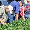 John P. Cleary |  The Herald Bulletin<br /> Farmers check out the field of organic grown beans on the Oak Ridge Farms during the Moses Organic Field Day held last week.