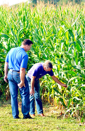 John P. Cleary |  The Herald Bulletin<br /> John Mesko and Frank Franks check out the stand of organic corn at Oak Ridge Farms in Pendleton during the Moses Organic Field Day.<br /> <br /> .