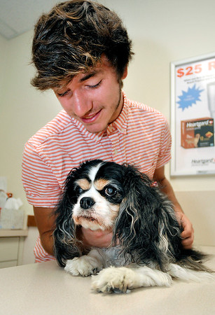 John P. Cleary    The Herald Bulletin<br /> Alexandria High School senior Cole Leemon is doing an internship at the Alexandria Animal Hospital where he works with the staff and the patients like Georgia.