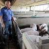 Don Knight | The Herald Bulletin<br /> Keith Schoettmer stands in the finishing barn at Schoettmer Prime Pork Farm near Tipton. The state legislature's Interim Study Committee on Agriculture and Natural Resources will meet this month to continue hearing information as they seek to update the state's laws regulating animal feeding operations.