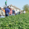 John P. Cleary |  The Herald Bulletin<br /> Farmers check out the field of organic grown beans as John-Paul Franks, above, of Oak Ridge Farms, explains to them his farming methods during the <br /> Moses Organic Field Day held last week.