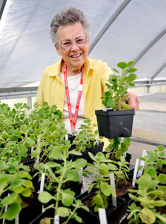 John P. Cleary | The Herald Bulletin<br /> Marilyn Crosley runs outdoor gardening program for Pendleton Elementary students. For Hometown Heroes series.