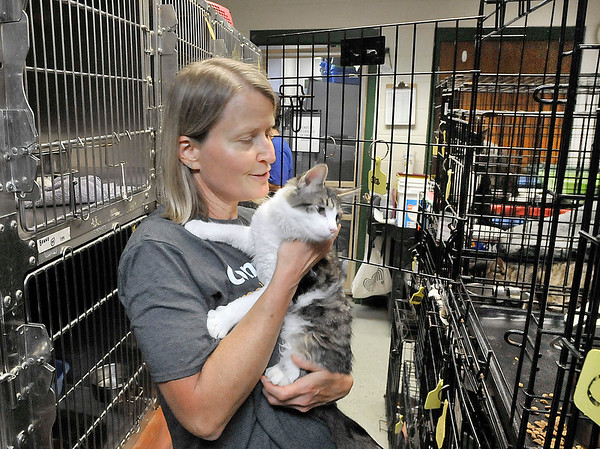 John P. Cleary | The Herald Bulletin<br /> The Animal Protection League is overran with cats as crates are stacked floor to ceiling to deal with the large numbers. Here volunteer Connie Rexing puts this cat back in it's cage as the staff was cleaning the cages.
