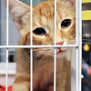 John P. Cleary | The Herald Bulletin<br /> The Animal Protection League is overran with cats as crates are stacked floor to ceiling to deal with the large numbers.