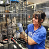 John P. Cleary | The Herald Bulletin<br /> The Animal Protection League is overran with cats as crates are stacked floor to ceiling to deal with the large numbers.  Here employee Ericka Schmidt starts to clean the numerous cages in the cat room.