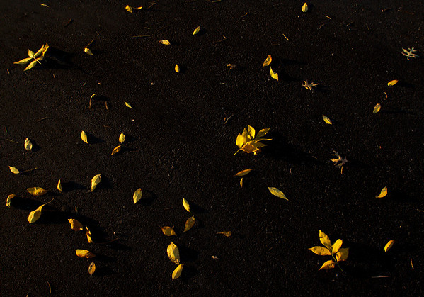 Yellow leaves lie on the pavement at the corner of Market Street and Scribner Drive in downtown New Albany. Staff photo by Christopher Fryer