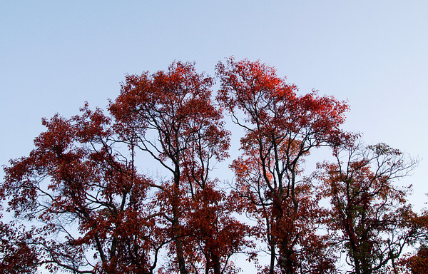 Red leaves hang above Floyd County at sunset. Staff photo by Christopher Fryer