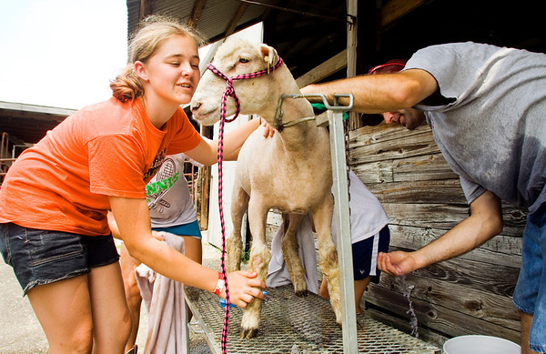 Josey Waterbury, 13, of Georgetown, helps her sisters and father wash Jordyn the sheep in preparation for the goat and sheep show at the Floyd County 4-H Fair in New Albany on Tuesday afternoon. The fair continues today and runs through Saturday, July 13. Staff photo by Christopher Fryer