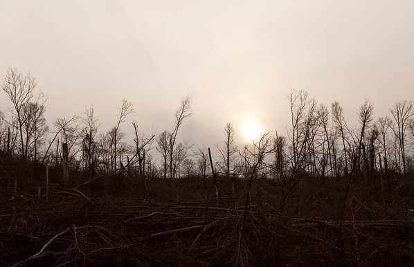 Mangled trees line a hillside along Ind. 60 in New Pekin on Wednesday evening. The trees were damaged last year when the March 2 tornadoes hit the area. Staff photo by Christopher Fryer