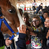 Students from Parkwood Elementary School pet a pony during Ag Day Tuesday at the Clark County 4-H Fairgrounds. Staff photo by C.E. Branham