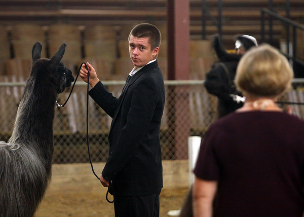Keegan Traub keeps eye contact with the judge as he shows his llama in the Clark county 4-H Llama Show Monday morning. Traub won first in senior showmanship and also was named grand champion in showmanship. Staff photo by C.E. Branham